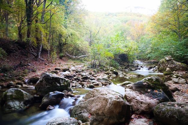 Zwembaden met water op de grond omgeven door groene wilde natuur en bos op zomerdag Premium Foto