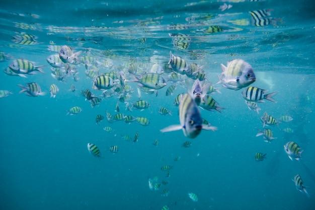 Zwerm vis in de andamanzee Premium Foto
