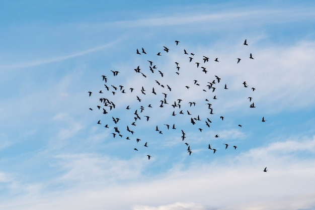 Zwerm vogels in blauwe hemel Premium Foto