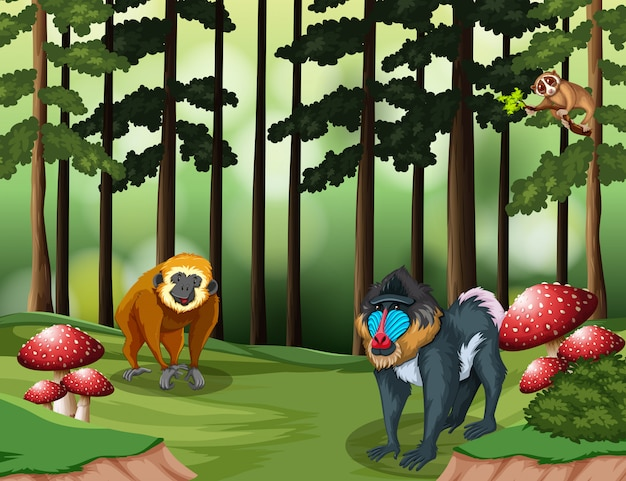 Aap in het bos Premium Vector