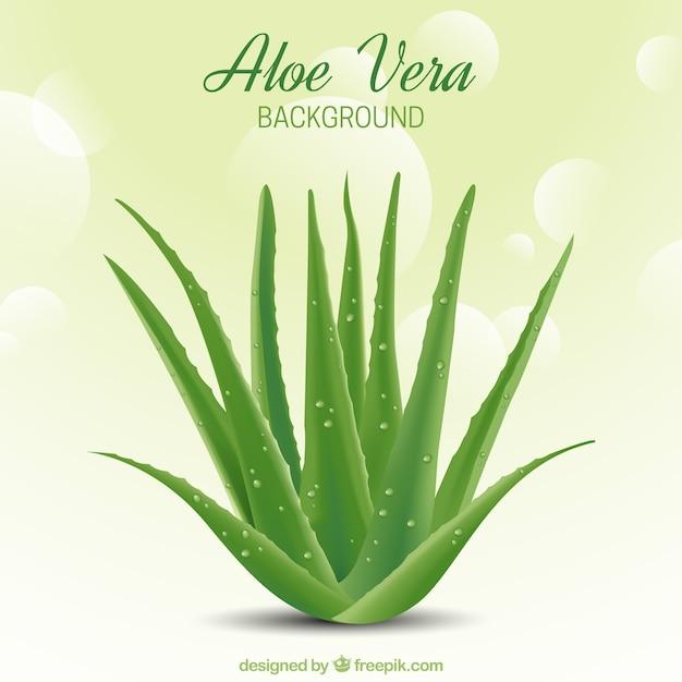 Abstracte achtergrond bokeh met aloë vera Premium Vector