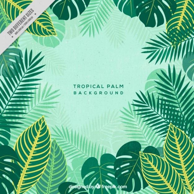 Achtergrond van tropische palm Gratis Vector