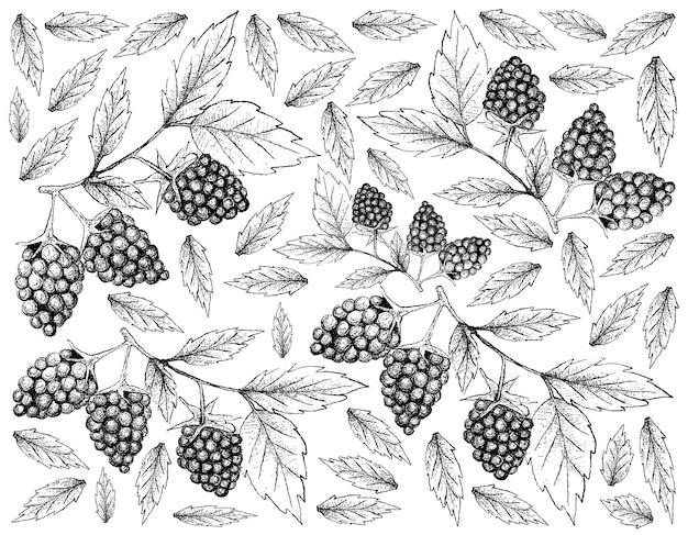 Achtergrond van verse blackberry-vruchten Premium Vector