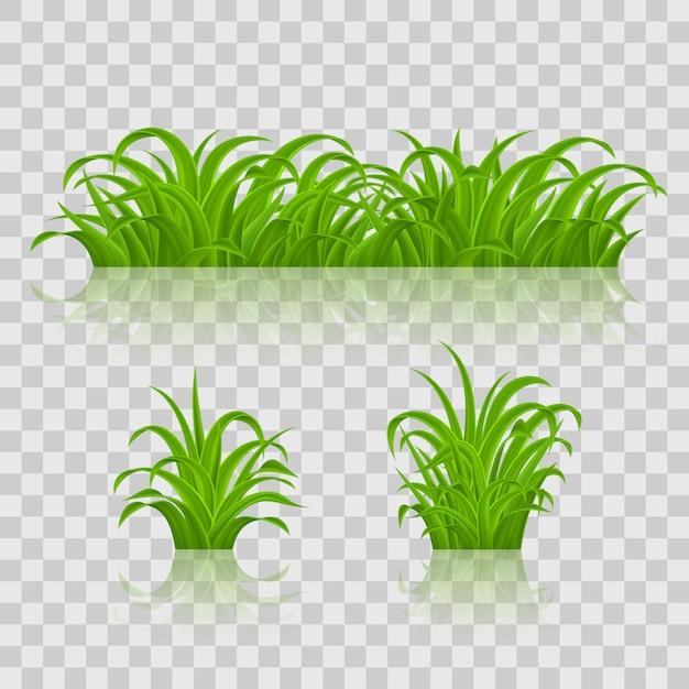 Achtergronden van groen gras. op transparante achtergrond Premium Vector