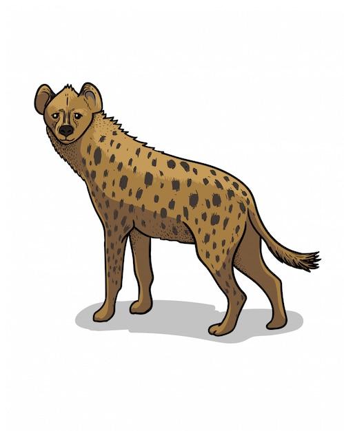 Afrikaanse savanne staande hyena geïsoleerd in cartoon stijl. educatieve zoölogie illustratie, kleurboek foto. Premium Vector