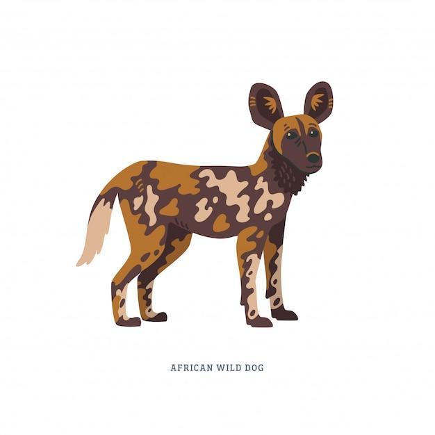 Afrikaanse wilde hond of lycaon pictus illustratie Premium Vector