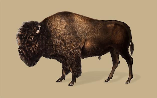 Amerikaanse bizon illustratie Gratis Vector