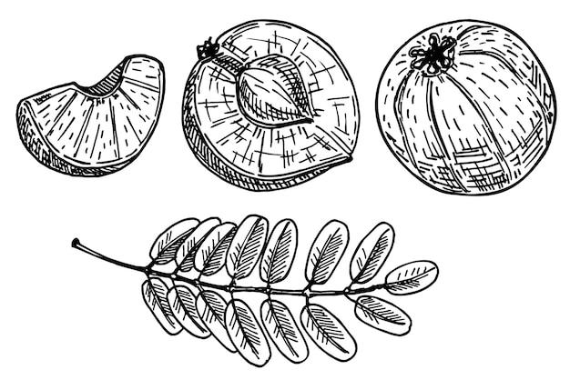 Amla fruit of bessen op witte, indiase verse rijpe kruisbes Premium Vector