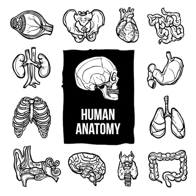 Anatomie icons set Gratis Vector