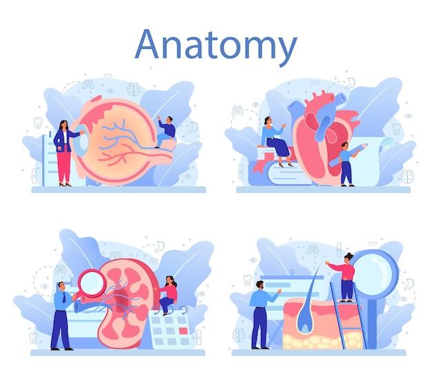 Anatomie schoolvak ingesteld. intern menselijk orgaan studeren. anatomie en biologie concept. menselijk lichaamssysteem. lever en nieren, hart en maag. Premium Vector