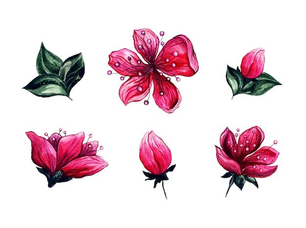 Aquarel bloemen kersenbloesem bloemen Gratis Vector