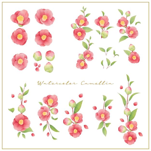 Aquarel camellia bloemen collectie vector Premium Vector