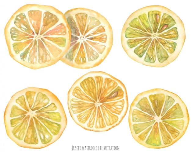 Aquarel citroenplakken Premium Vector