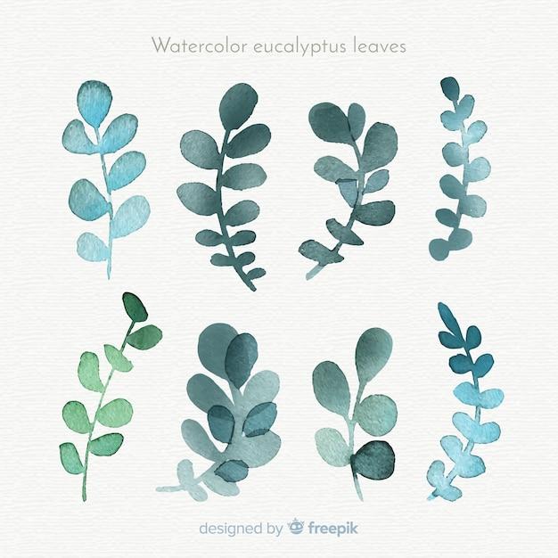 Aquarel eucalyptus bladeren collectie Gratis Vector