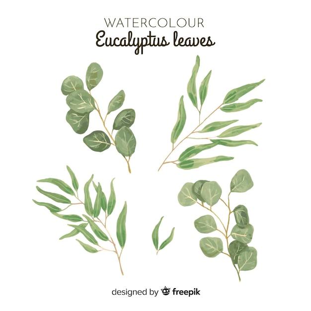 Aquarel eucalyptus bladeren instellen Gratis Vector
