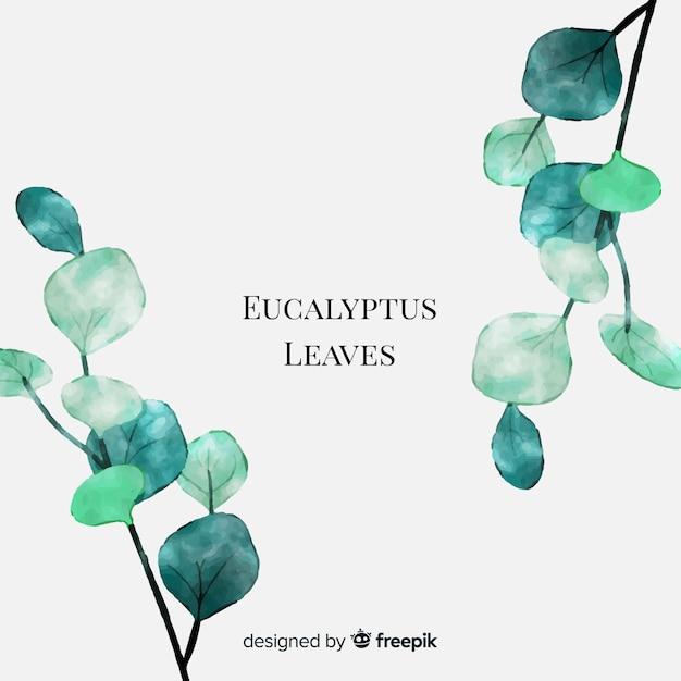 Aquarel eucalyptus bladeren Gratis Vector