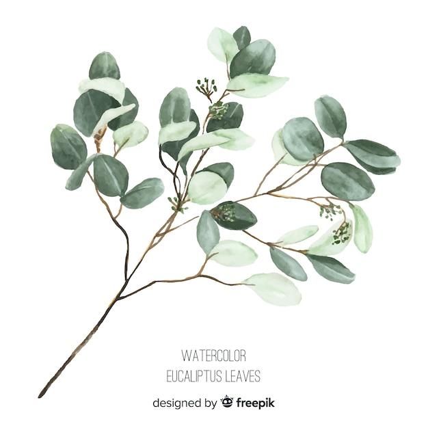 Aquarel eucalyptus tak Gratis Vector