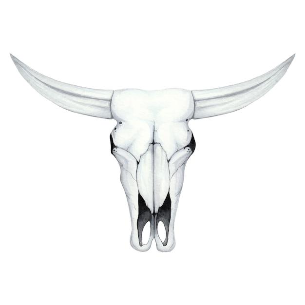 Aquarel illustratie met een schedel van een buffel Premium Vector