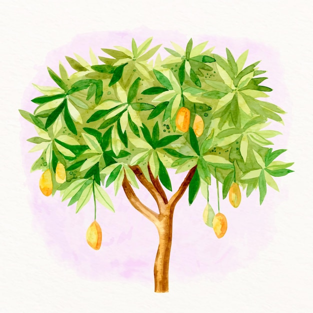 Aquarel mangoboom illustratie Gratis Vector