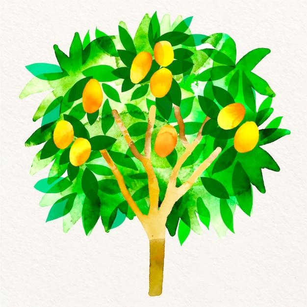 Aquarel mangoboom illustratie Premium Vector