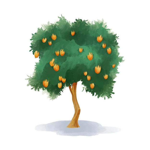 Aquarel mangoboom met fruit Gratis Vector