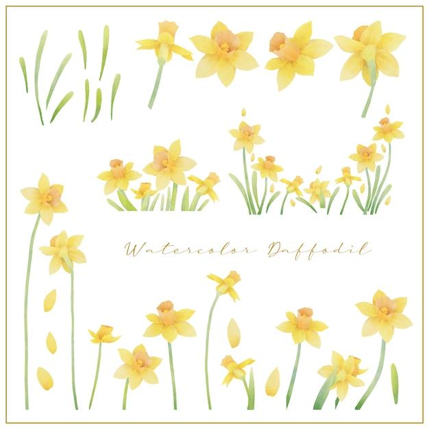 Aquarel narcis bloemen collectie vector Premium Vector