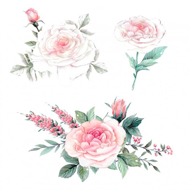 Aquarel roze rozen vintage set. Premium Vector