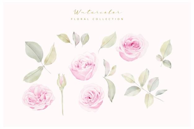 Aquarel rozen bloem collectie vector Gratis Vector