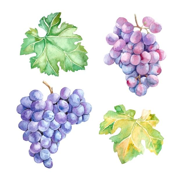 Aquarel set van tros druiven en bladeren Premium Vector