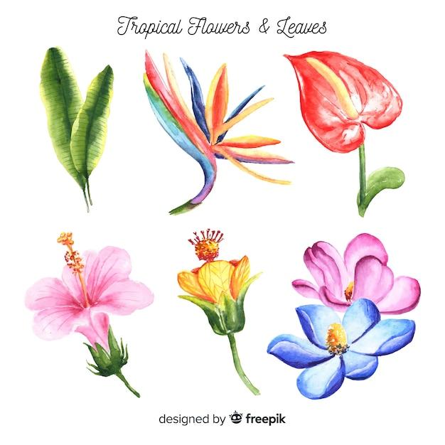Aquarel tropische bloemen en bladeren pack Gratis Vector
