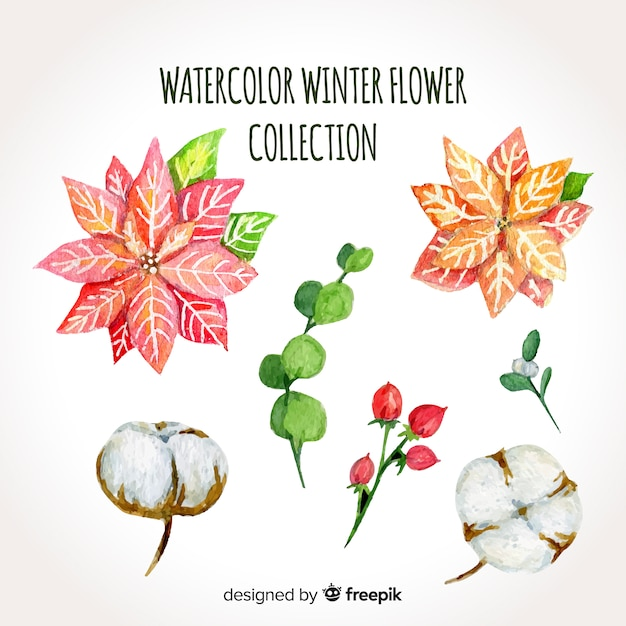 Aquarel winter bloem collectie Gratis Vector