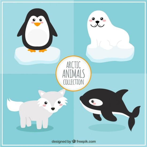 Arctic dieren collection Gratis Vector