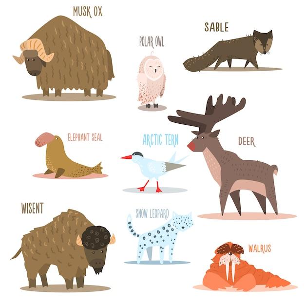 Arctische en antarctische dieren, vogels. illustratie Premium Vector