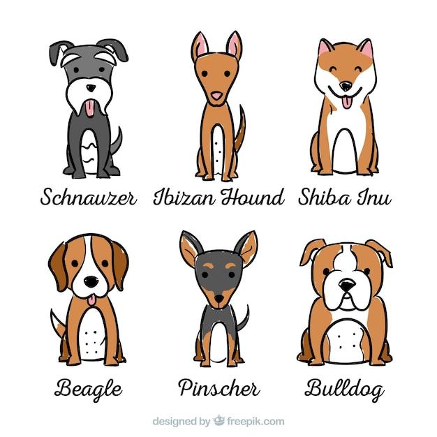 Assortiment honden met zes verschillende rassen Gratis Vector