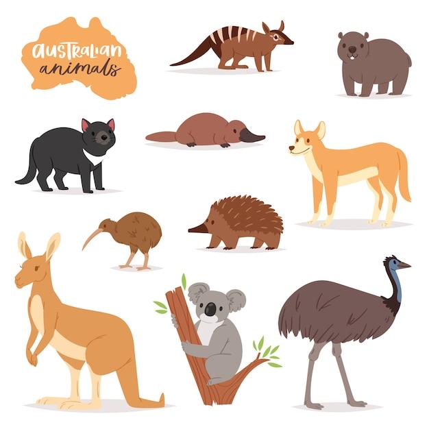 Australische dieren vector animalistische karakter in het wild australië kangoeroe koala en platypus illustratie set van cartoon wilde wombat en emu geïsoleerd Premium Vector