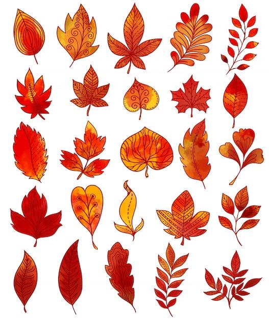 Autumn foliage hand drawn collection Gratis Vector