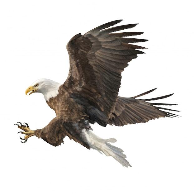 Bald eagle attack swoop hand draw witte achtergrond. Premium Vector