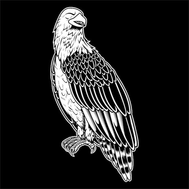 Bald eagle Premium Vector