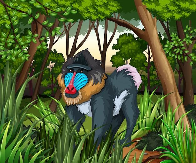 Baviaan die in het donkere bos leeft Gratis Vector