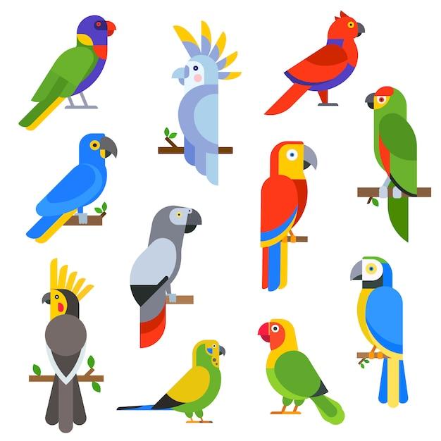 Beeldverhaalpapegaaien geplaatst en papegaaien wilde dierlijke vogels vectorillustratie Premium Vector