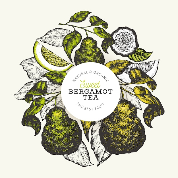 Bergamot tak ontwerpsjabloon Premium Vector