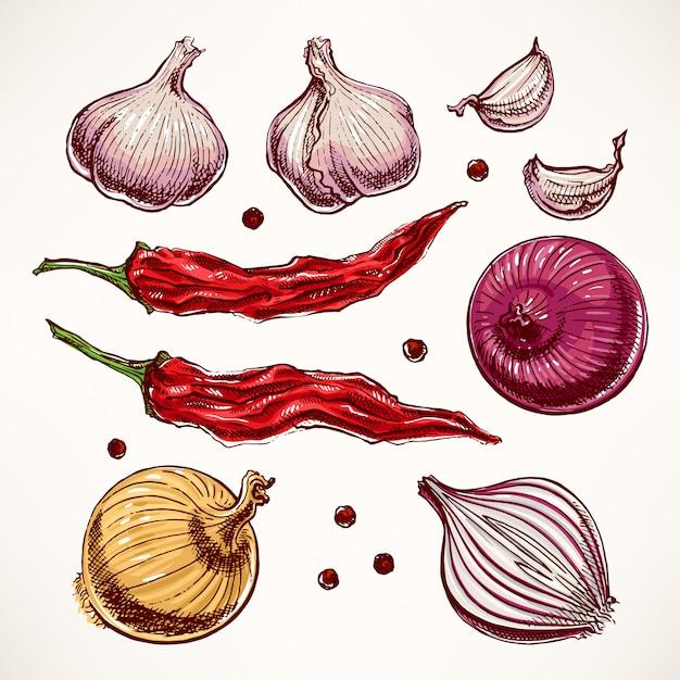 Bezet met groenten en kruiden. handgetekende illustratie Premium Vector