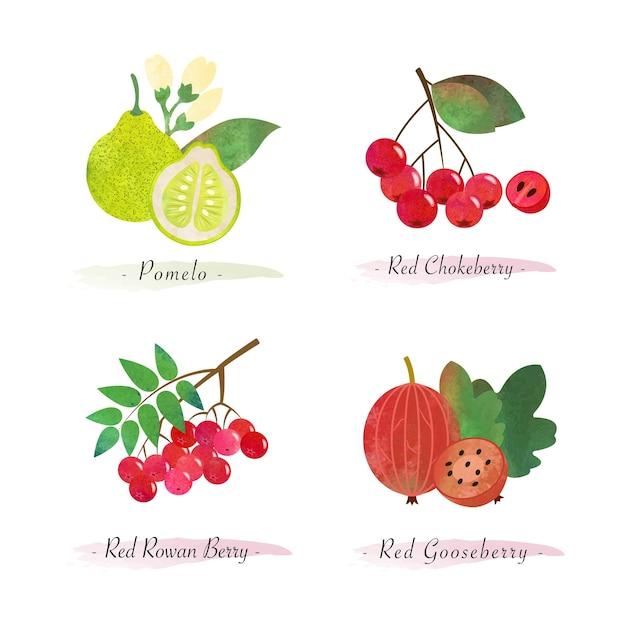 Biologische gezonde voeding fruit pomelo rode appelbes rode lijsterbes rode kruisbes Premium Vector