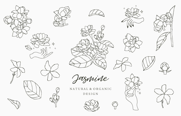 Black jasmine-logoverzameling met bladeren. Premium Vector