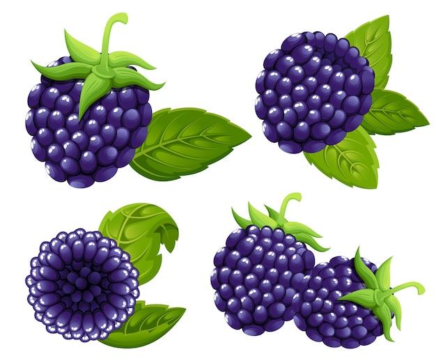 Blackberry-reeks. illustratie van bosbes met groene bladeren. illustratie voor decoratieve poster, embleem natuurlijk product, boerenmarkt. website-pagina en mobiele app. Premium Vector