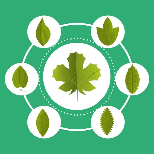 Blad en grafische bladerenecologie Gratis Vector
