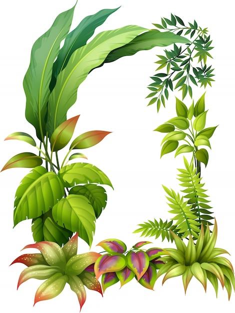 Blauwe planten Gratis Vector