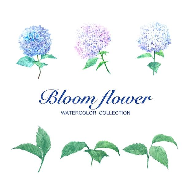 Bloei bloem aquarel hortensia en bladeren op wit voor decoratief gebruik. Gratis Vector