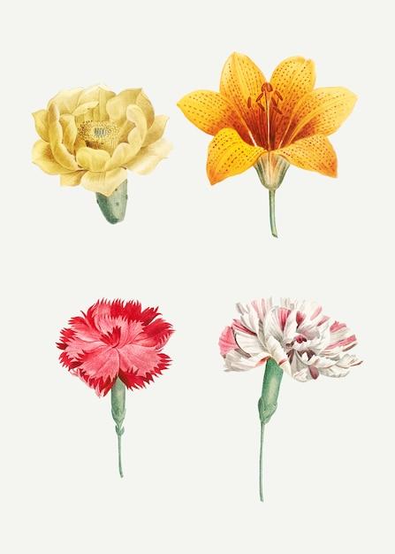 Bloeiende gemengde bloemen Gratis Vector