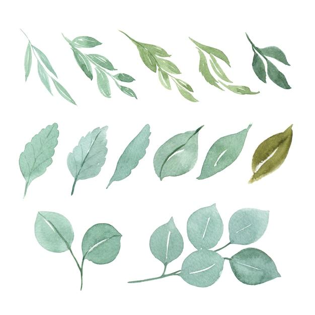 Bloemen en bladeren aquarel elementen instellen Premium Vector